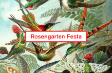 Residency – project for Rosengarten Festa 2014